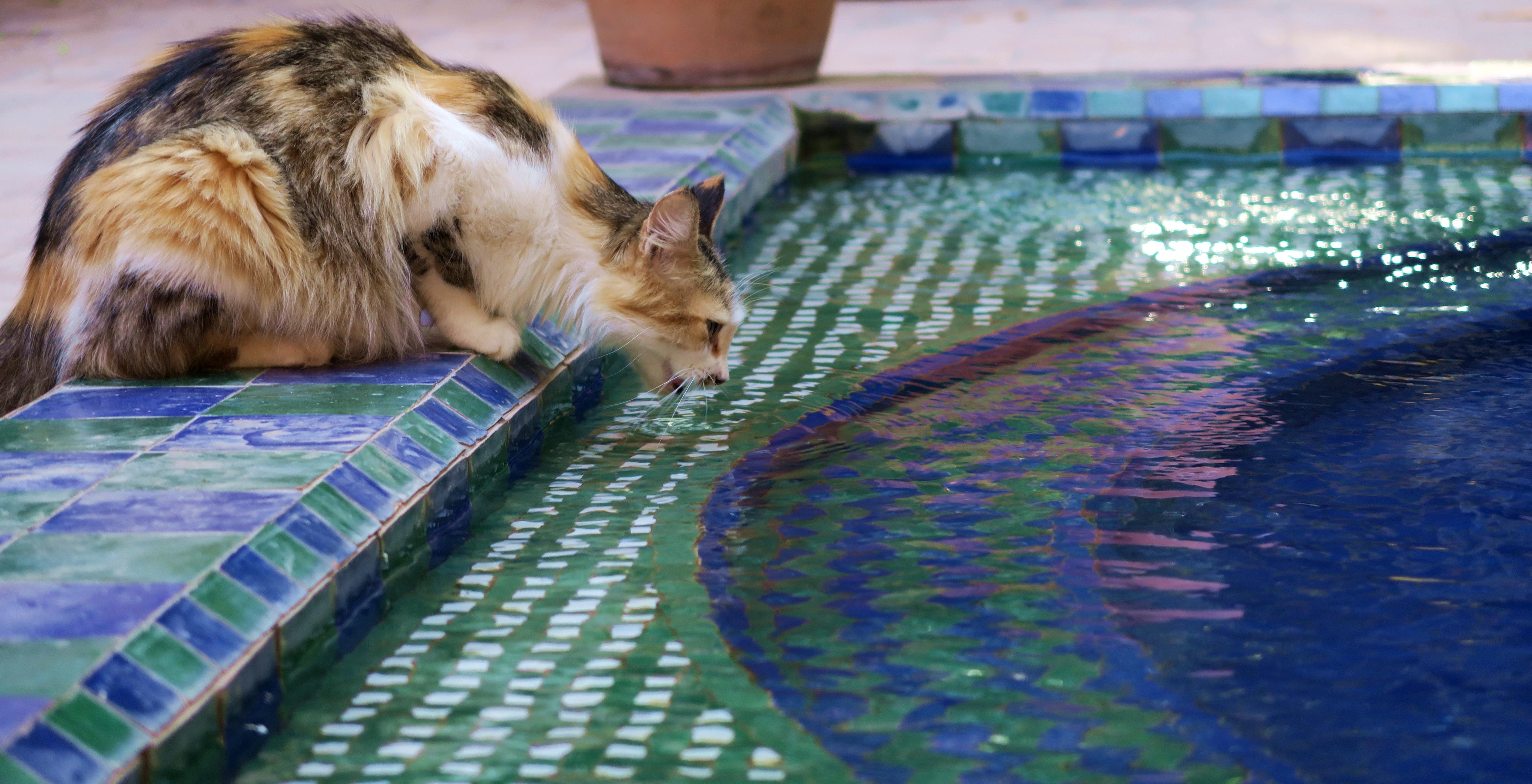 Marakech Jardin Marjorelle Cat
