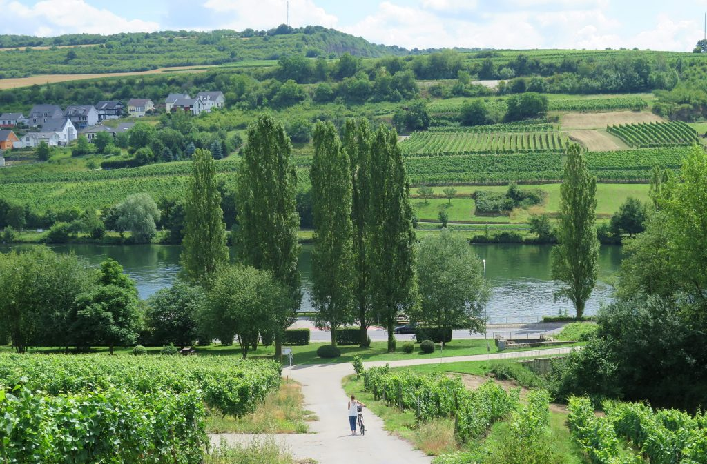 Grevenmacher Views Vineyard