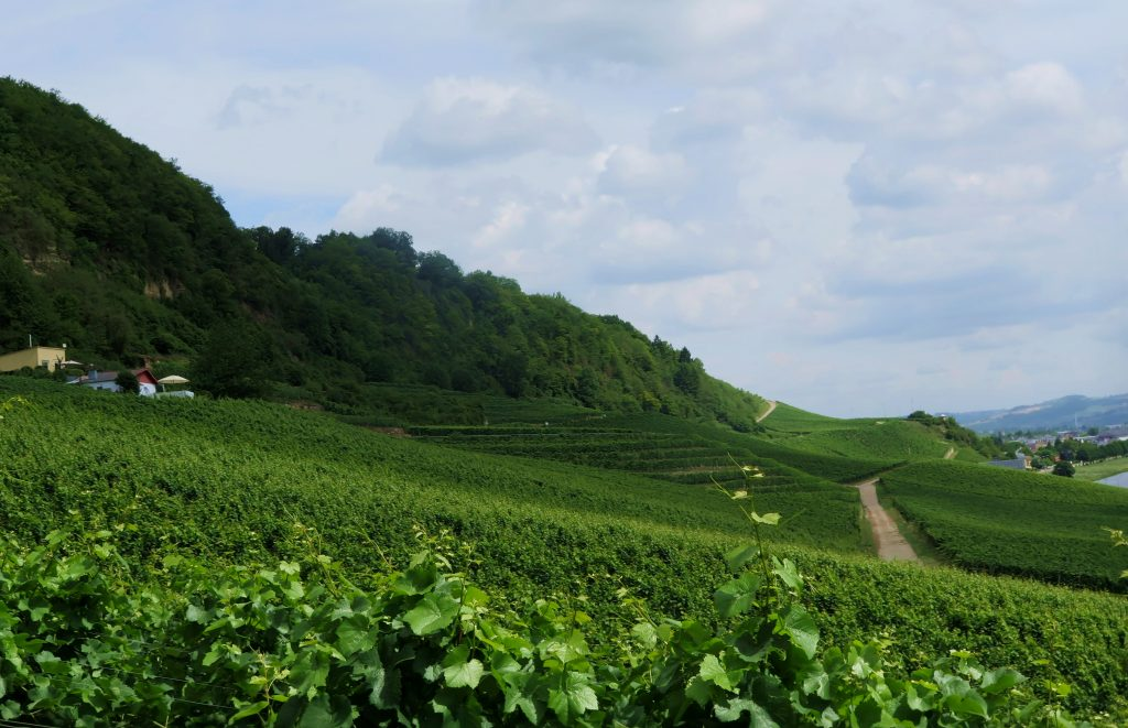 Grevenmacher Vineyard