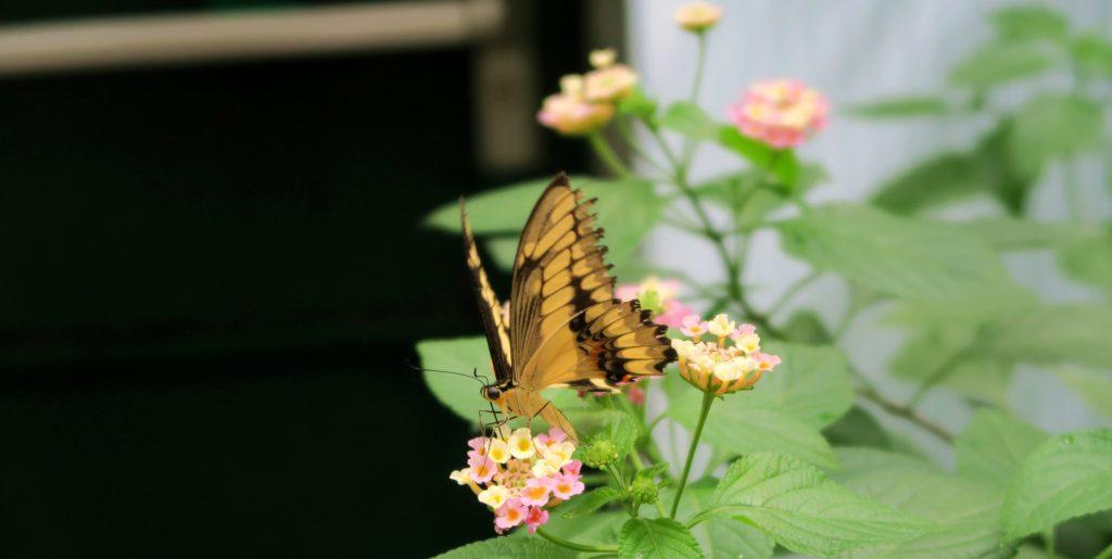 Jardin Des Papillons Luxembourg