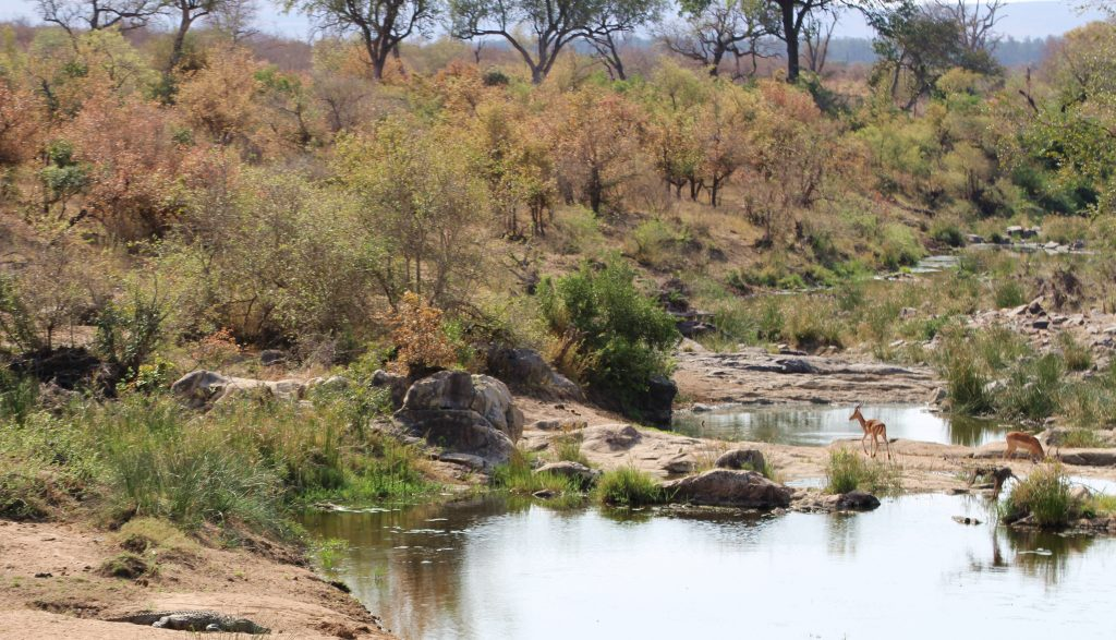 Kruger Safari Scenery on a Budget