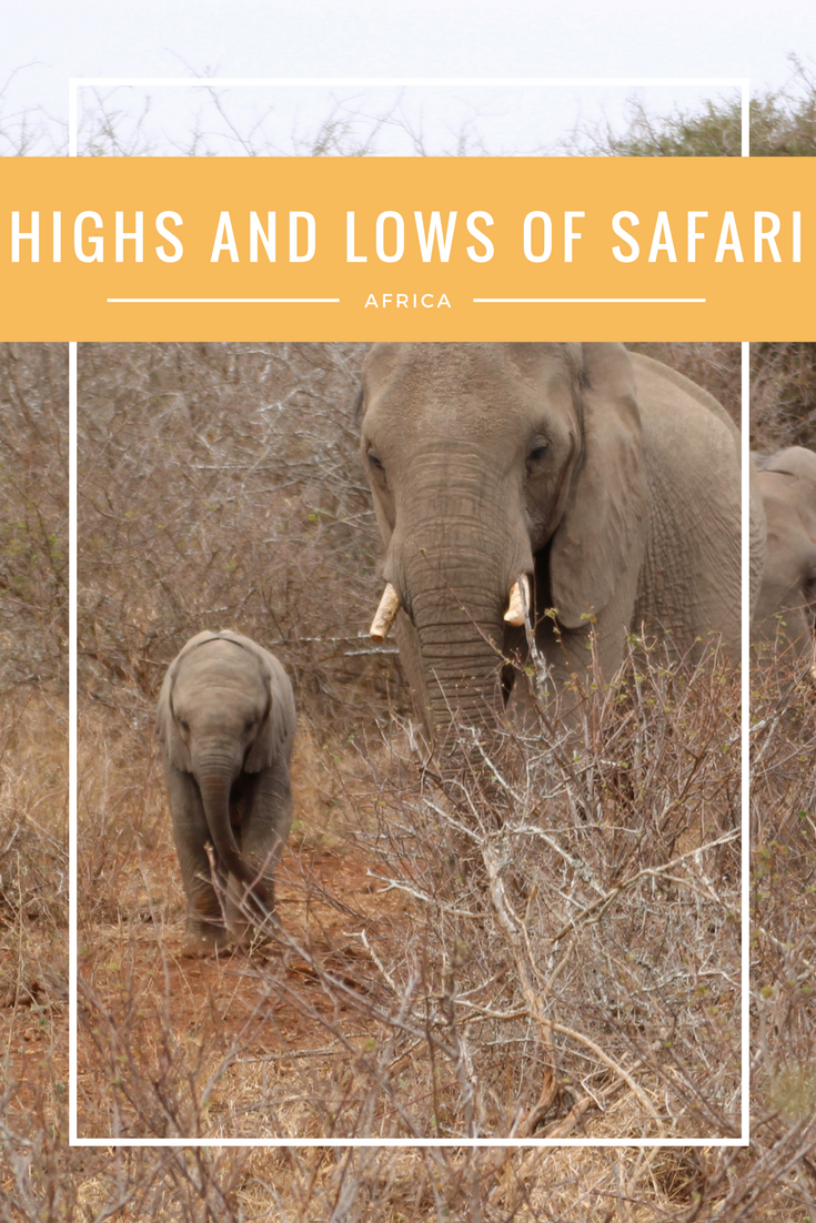 HIGHS AND LOWS OF A SAFARI | If you're going on a safari any time soon, you should be prepared for both the highs and lows! #Kruger #Safari #SouthAfrica