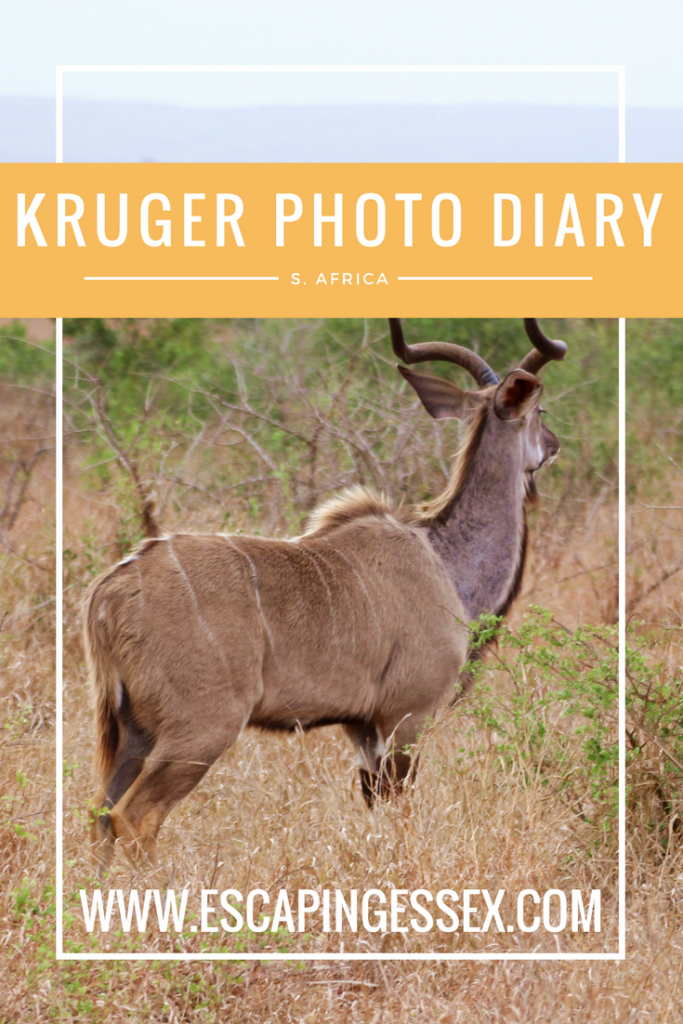 KRUGER PHOTO DIARY - A complete summary of my trip to Kruger National Park featuring epic photos!