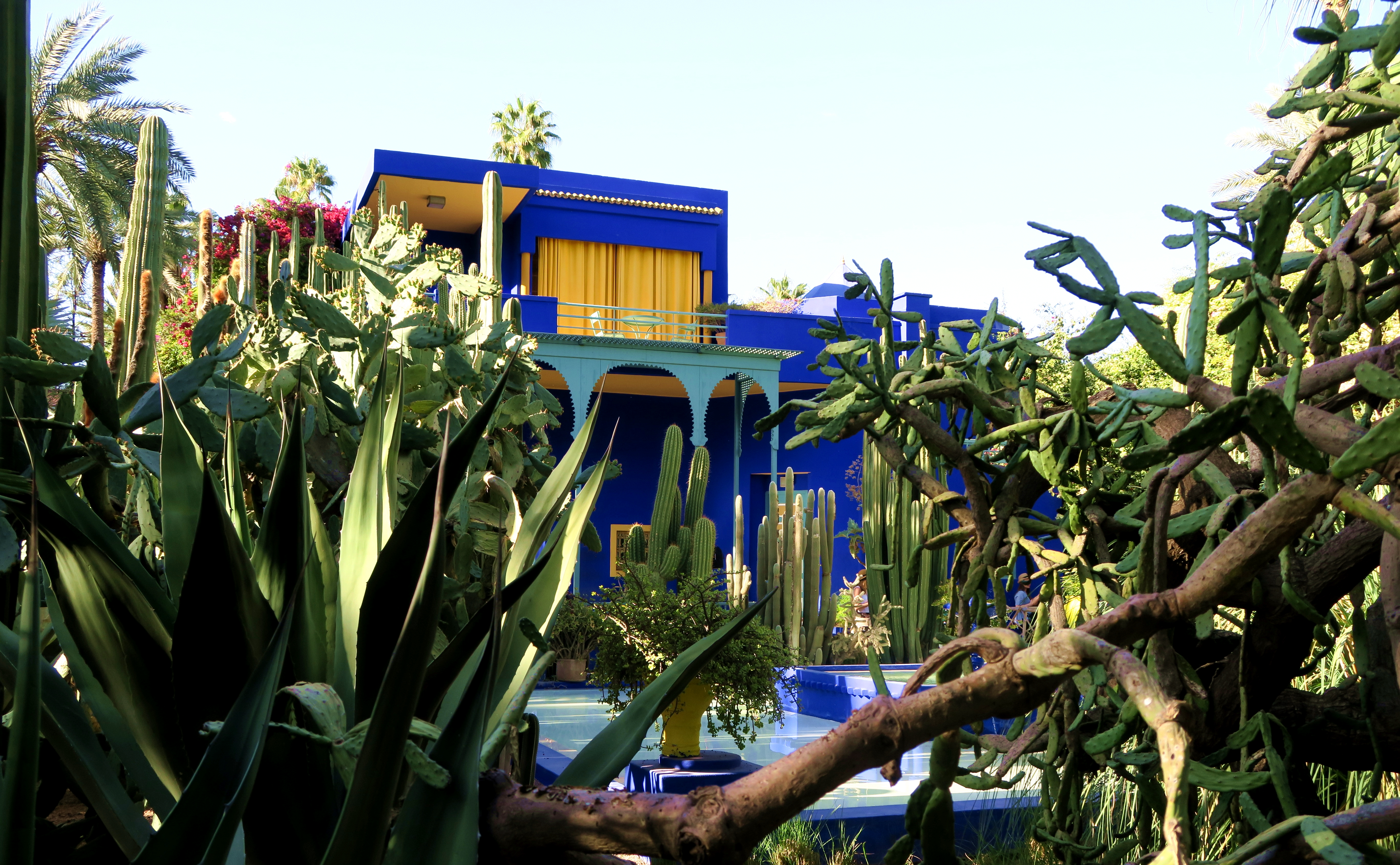 Marakech Jardin Marjorelle Cacti