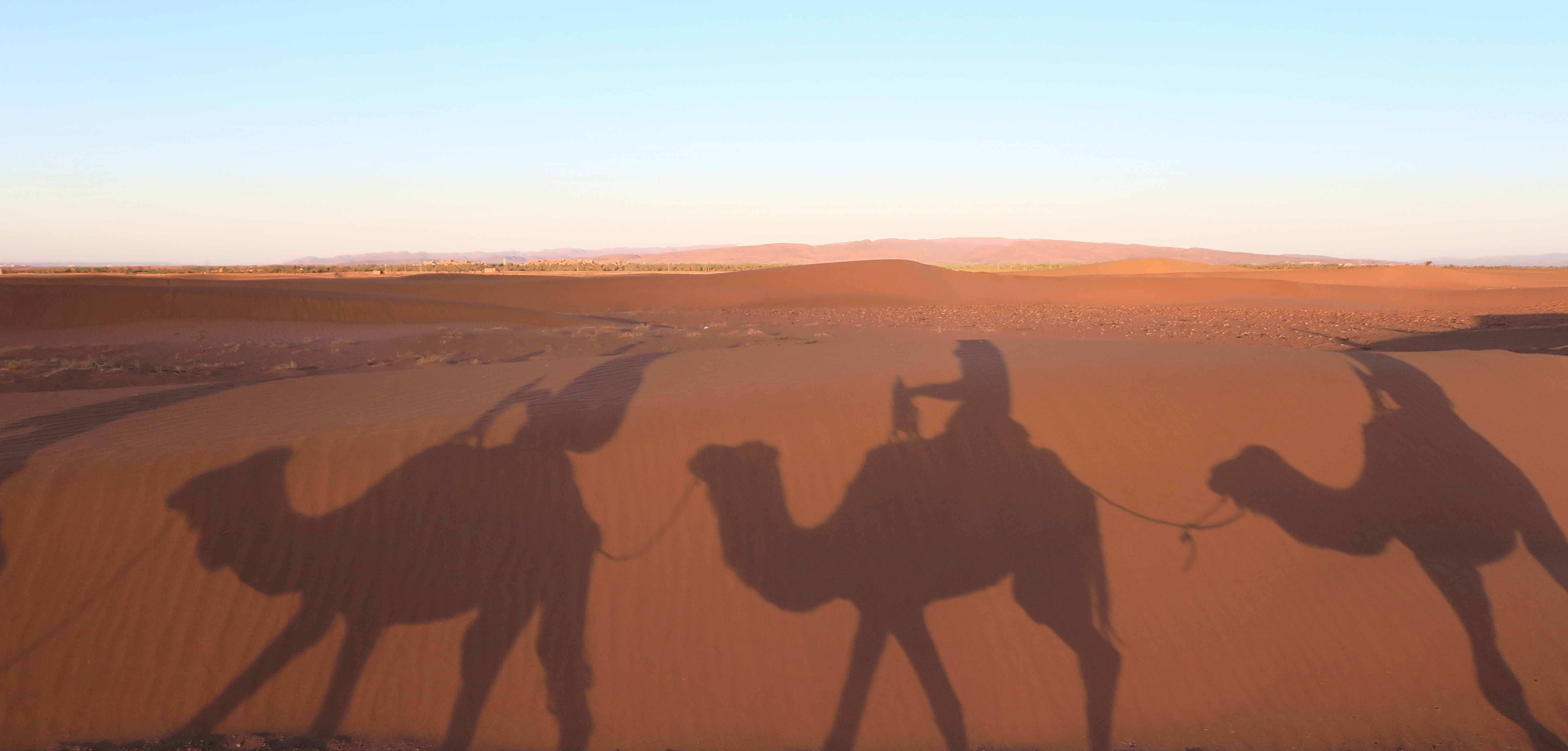 Sahara-Desert-Camels