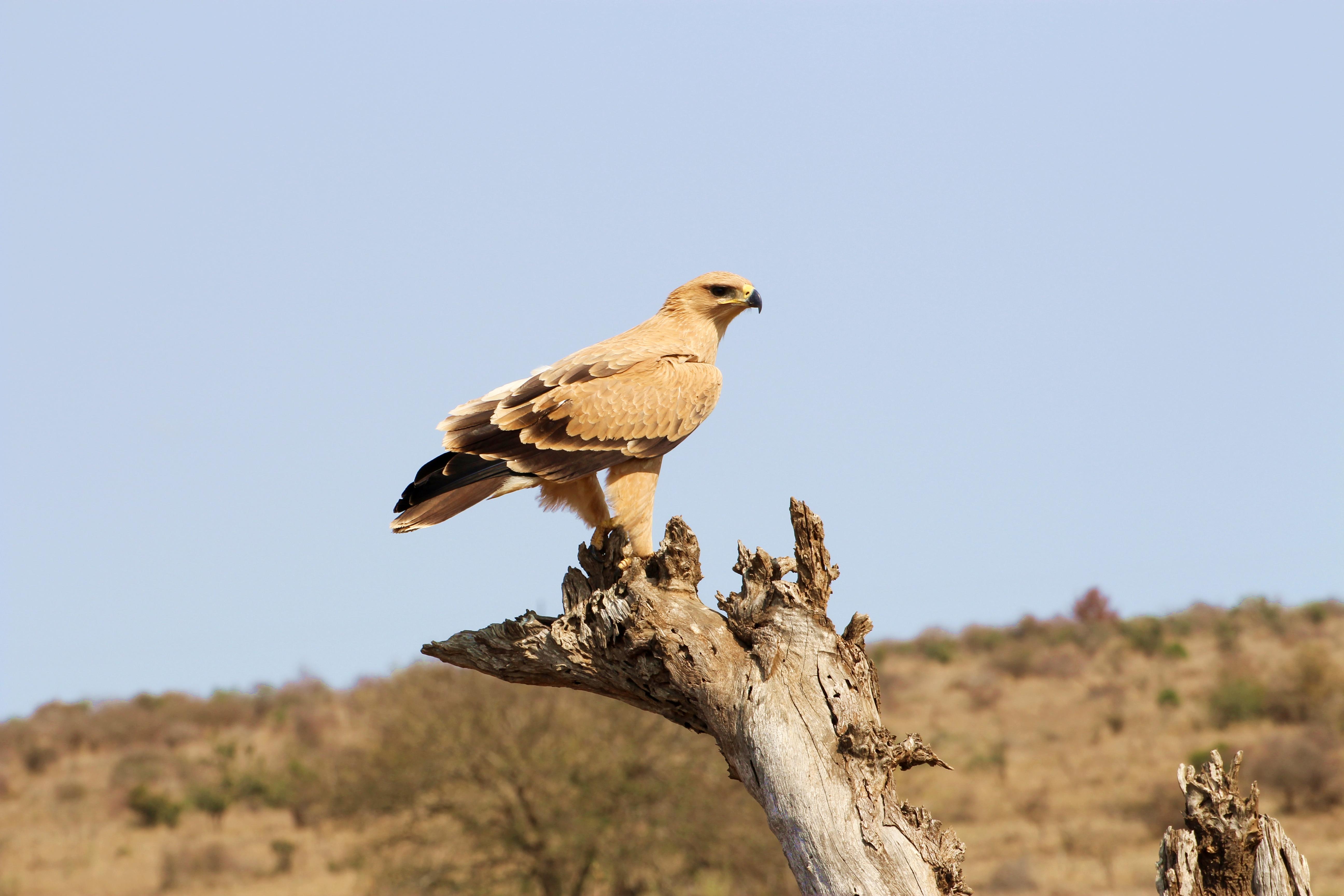 Kruger bird