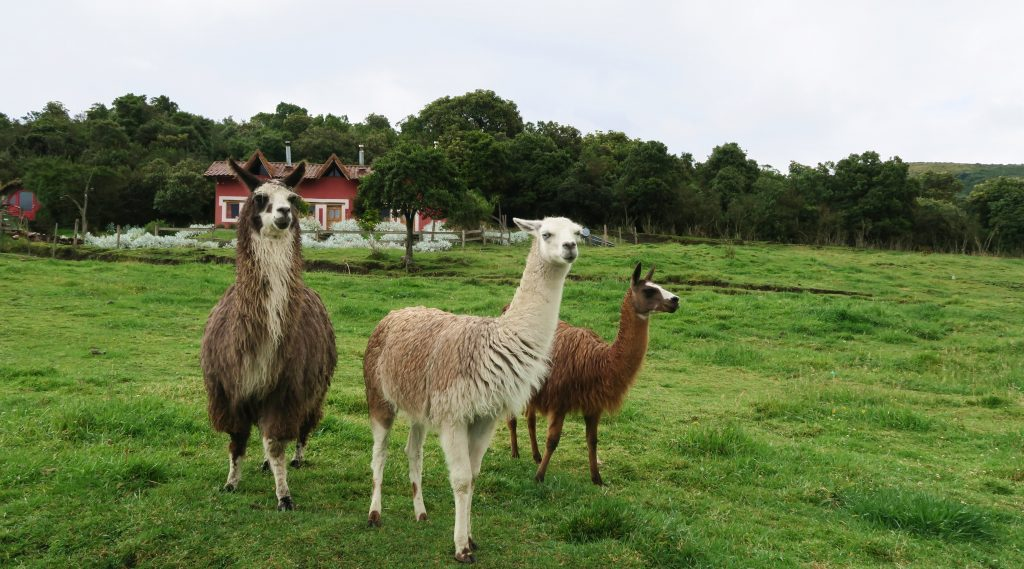 Secret Garden Llamas and Alpacas