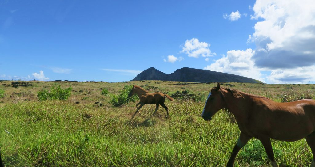 Wild Horses on Easter Island