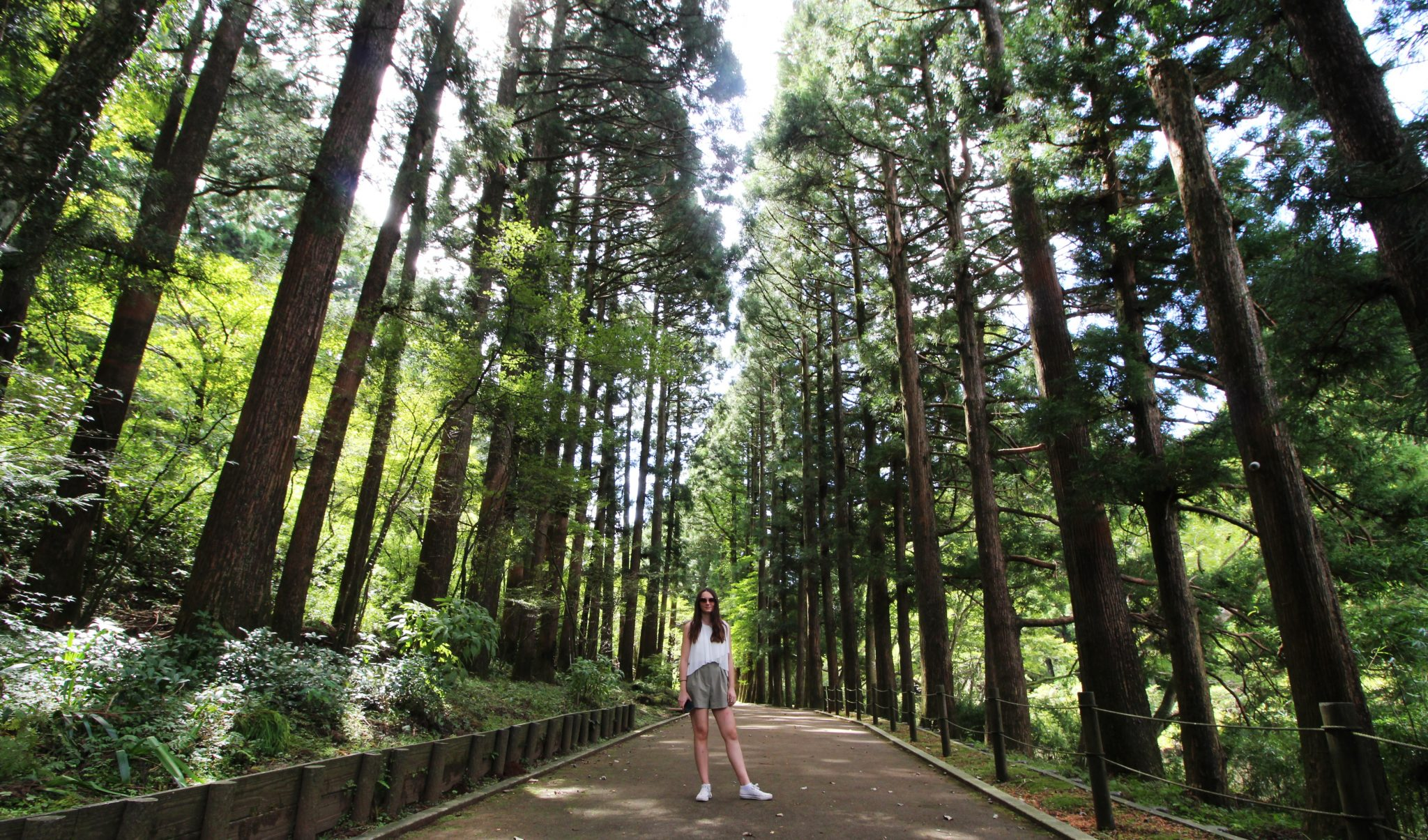 Girl in Cedar WOod Avenue, Hakone, Japan