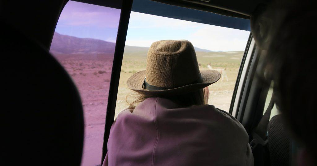 Girl looking out car window at llama