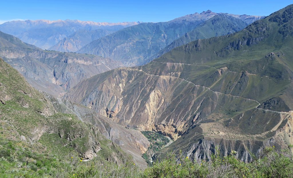 View of Oasis In The Colca Canyon