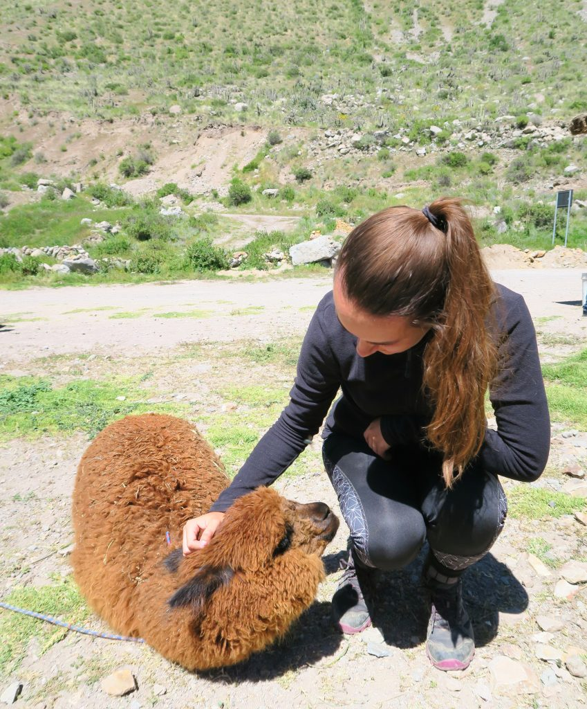 Girl with Alpaca in South America