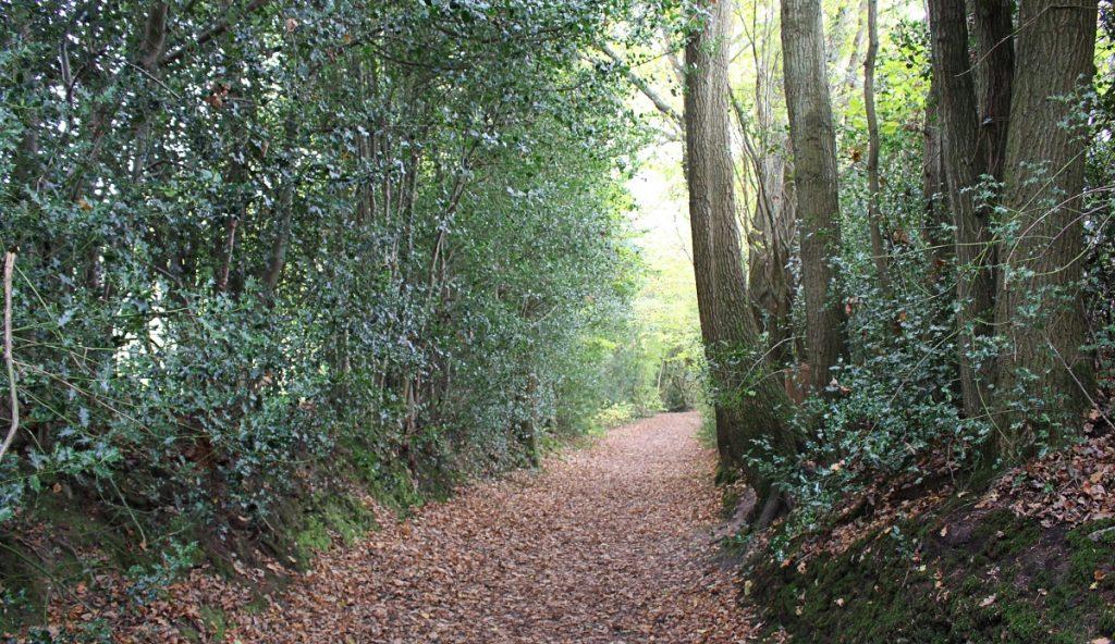 Winnie The Pooh Trail, Ashdown Forest