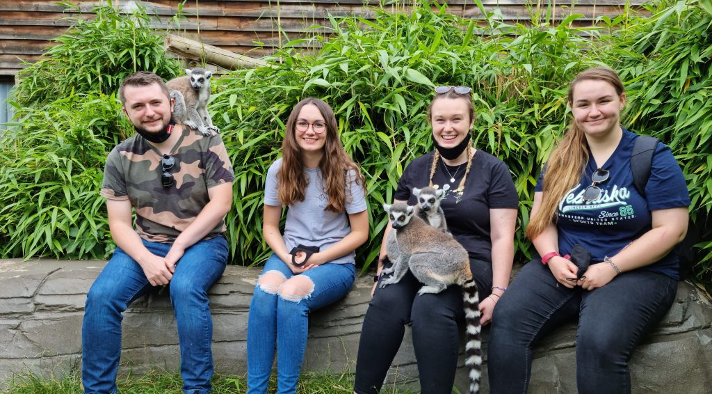 One male with a ringtailed lemur on his shoulder and three females, one with two ringtailed lemurs on her lap taking part in Colchester Zoo's extra-ordinary experience day.