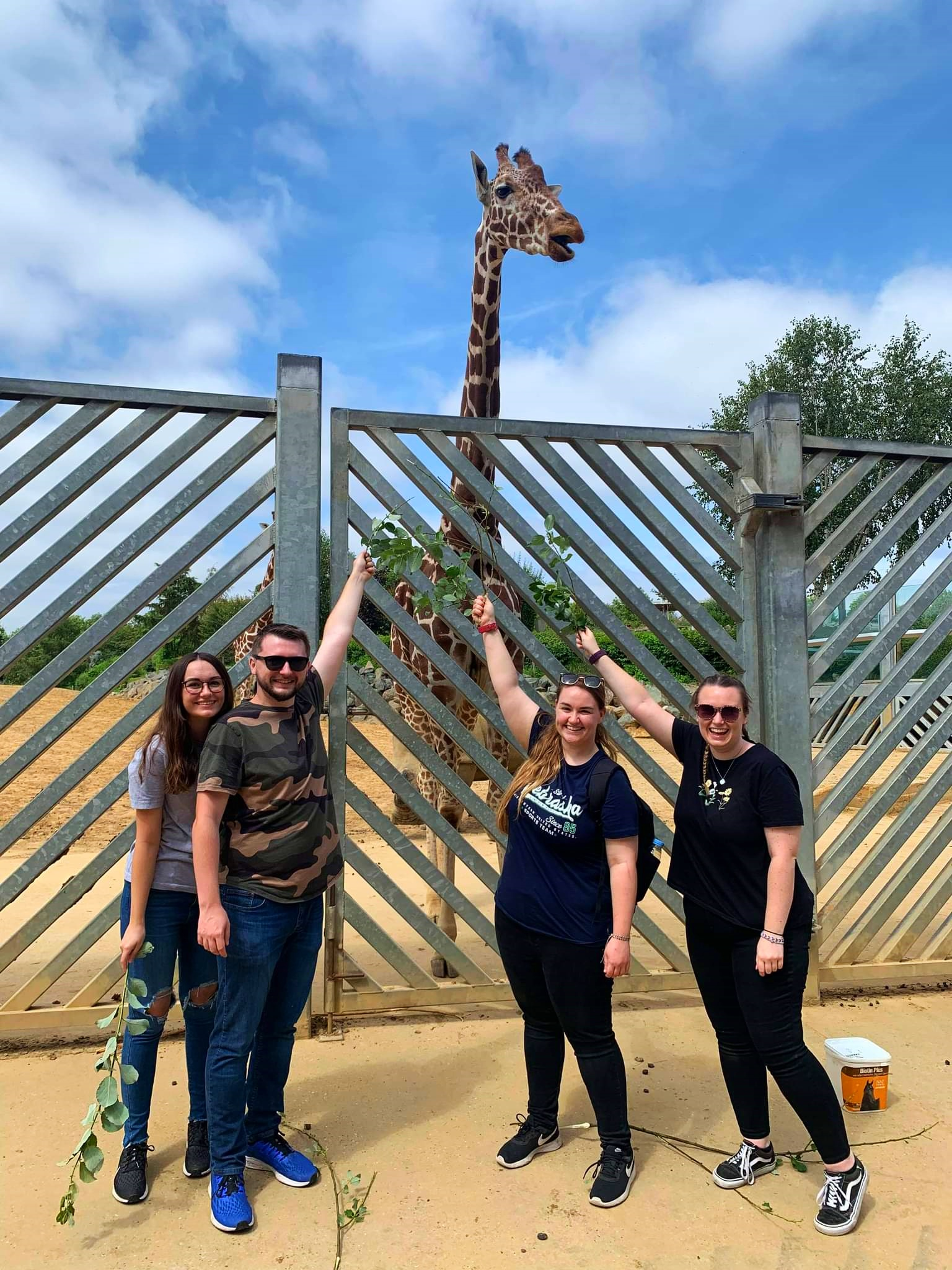 Colchester four people feeding the giraffes onZoo extra-ordinary experience day.